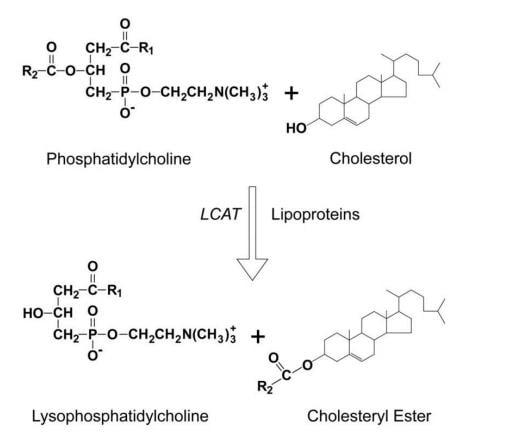 Lecithin Cholesterol Acyltransferase (LCAT) Activity assay kit