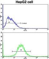 Flow Cytometry (FC/FACS) FTH1.