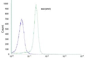 anti-BAX antibody Flow Cytometry (FC/FACS)|Flow cytometric analysis of rabbit anti-BAX (SP47) antibody in HeLa (green) compare to negative control of rabbit IgG (blue) (FC/FACS) image