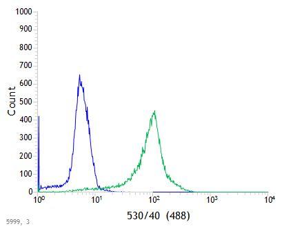 anti-STING antibody