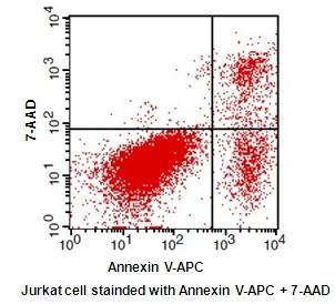 Annexin V-APC / 7-AAD Apoptosis Detection Kit detection kit ...