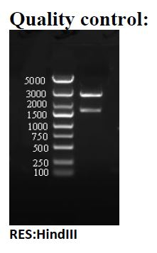 Testing Data pBMH-H1.