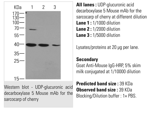 Monoclonal UR 144 Antibody - Search Results - MyBioSource