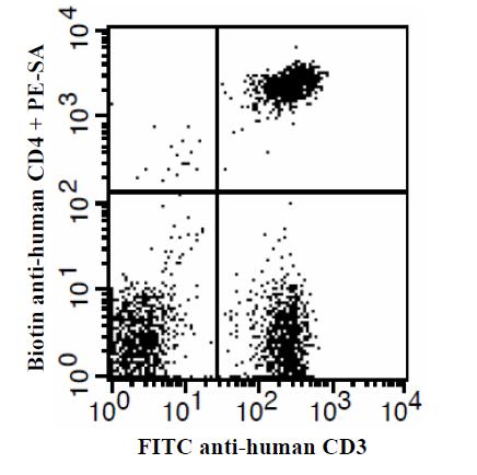 Illustration of Immunofluorescent Staining
