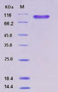 Testing Data (TD)