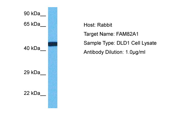 41 kDa MW of target protein - Search Results - MyBioSource