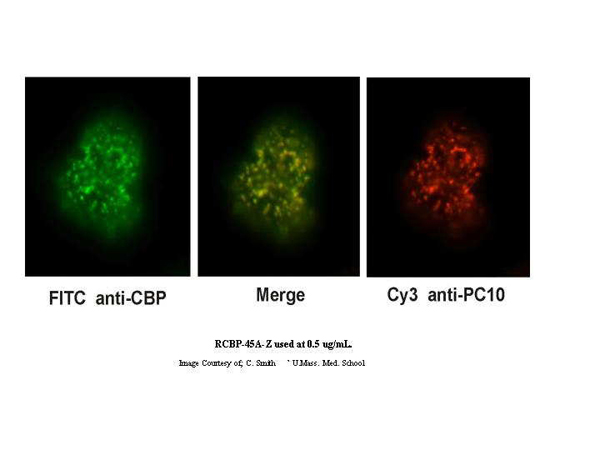 anti-CALM3 antibody Testing Data image
