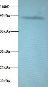 Testing Data AFG3L2.