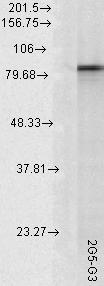 Testing Data #2 Hsp90 alpha.