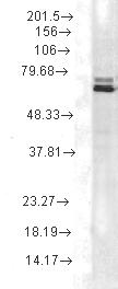 Testing Data HSPA1A.