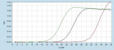 Amplication hsa-mir-320b RT-PCR.