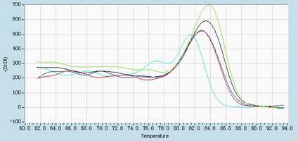 Dissociation Curve hsa-mir-146b-5p Real-Time RT-PCR.