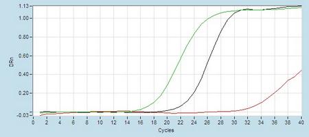 Amplication hsa-mir-10b Real-Time RT-PCR.