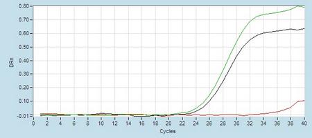 Amplication #2 hsa-mir-219 RT-PCR.