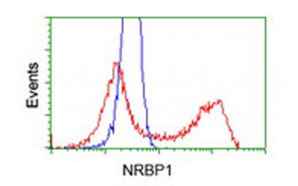 Flow Cytometry (FC/FACS) NRBP1.