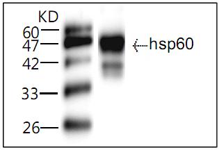 Testing Data LP HSP60.