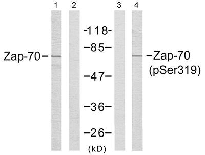 Testing Data #2 Zap-70.