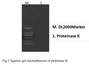 Detection of Nucleic Acid Residue