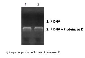 Detection of DNAse Residue