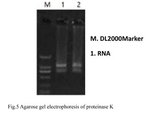 Detection of RNAse Residue