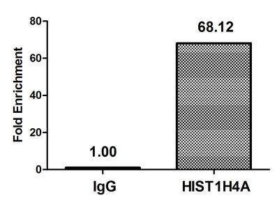 Chromatin Immunoprecipitation (ChIP)
