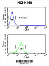 Flow Cytometry (FC/FACS) PITX1.