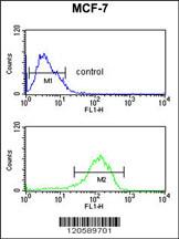 Flow Cytometry (FC/FACS) LSP1.